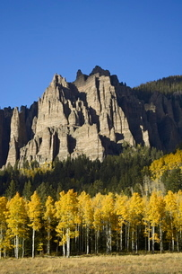 Aspens in fall colors with mountains, near Silver Jack, Uncompahgre National Forest, Colorado'の写真素材 [FYI03774786]