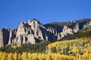 Aspens in fall colors with mountains and evergreens, near Silver Jack, Uncompahgre National Forest,の写真素材 [FYI03774790]