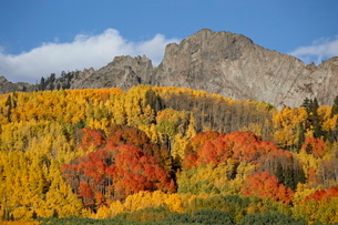The Dyke with fall colors, Grand Mesa-Uncompahgre-Gunnison National Forest, Colorado'の写真素材 [FYI03775189]