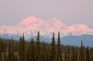 Mount McKinley (Mount Denali), Denali Highway, Alaska'の写真素材 [FYI03775511]