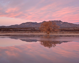 Pink clouds and pond at sunrise, Bosque Del Apache National Wildlife Refuge, New Mexico'の写真素材 [FYI03775541]