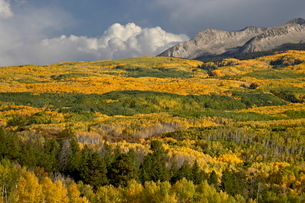 Fall colors, Gunnison National Forest, Colorado'の写真素材 [FYI03775567]