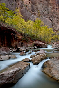 Cascades on the Virgin River in the fall, Zion National Parkの写真素材 [FYI03775824]