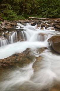 Cascades on Deception Creek, Mount Baker-Snoqualmie National Forest, Washington'の写真素材 [FYI03776884]