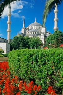 The Blue Mosque (Sultan Ahmet Mosque) (Sultanahmet Camii), Istanbul, Turkey, Eurasiaの写真素材 [FYI03776921]