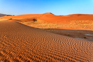 Dried plants among the sand dunes shaped by wind, Deadvlei, Sossusvlei, Namib Desert, Namib Naukluftの写真素材 [FYI03777187]