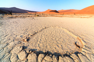Parched ground and dead Acacia surrounded by sandy dunes, Deadvlei, Sossusvlei, Namib Desert, Namibの写真素材 [FYI03777191]