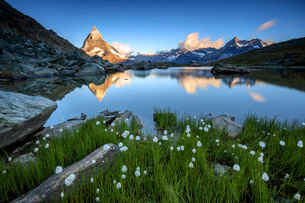 Cotton grass frames the Matterhorn reflected in Lake Stellisee at dawn, Zermatt, Canton of Valais, Sの写真素材 [FYI03777240]