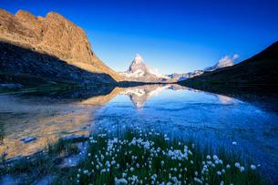 Cotton grass frame the Matterhorn reflected in Lake Stellisee at dawn, Zermatt, Canton of Valais, Swの写真素材 [FYI03777254]