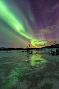 Aurora Borealis on the frozen lagoon of Jaegervatnet, Stortind, Lyngen Alps, Troms, Lapland, Norway,の写真素材 [FYI03777259]