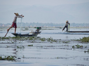 Fishermen cast their nets in Inle Lake, Shan Stateの写真素材 [FYI03777387]