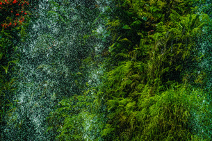 鬱蒼としたジャングルの中の滝の写真素材 [FYI03777437]
