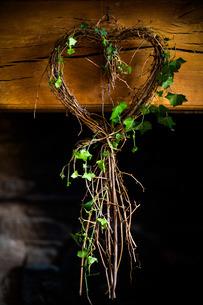 Ivy in heart shapeの写真素材 [FYI03777483]