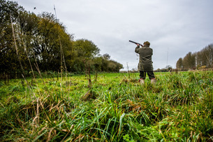 Gun shooting at bird on Driven pheasant shoot, Wiltshireの写真素材 [FYI03777524]