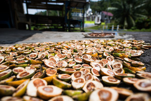 Betel nuts being sold in Pulua Weh, Sumatra, Indonesia, Southeast Asiaの写真素材 [FYI03777531]