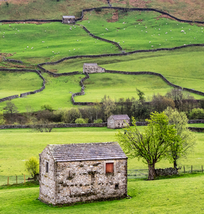 Hay barns, Muker, Swaledale, Yorkshire Dales, Yorkshireの写真素材 [FYI03777589]
