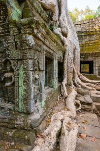 Ta Prohm temple (Rajavihara), Angkor, Siem Reap Province, Cambodia, Indochina, Southeast Asiaの写真素材 [FYI03777767]