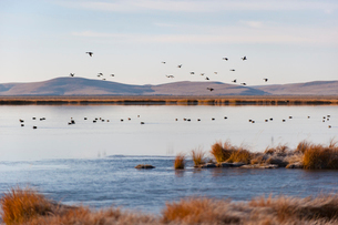 Huahu (Flower Lake), an important sanctuary for birds, Sichuanの写真素材 [FYI03777906]