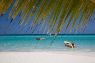 Negril, Jamaica, Caribbeanの写真素材 [FYI03778076]