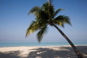 Negril, Jamaica, Caribbeanの写真素材 [FYI03778078]