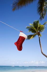 Christmas sock, Las Terrenas, Samana Peninsula, Dominican Republic, Caribbeanの写真素材 [FYI03778230]