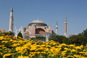 Hagha Sophia with flowers in foreground, Sultanahmet Square, Istanbul, Turkeyの写真素材 [FYI03778924]