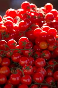 Cherry tomatoes for sale in market in Alberobello, Pugliaの写真素材 [FYI03779079]