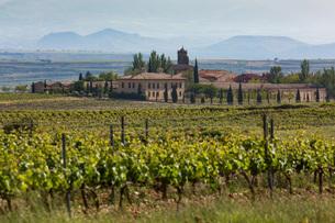 Idyllic vineyard in La Riojaの写真素材 [FYI03779363]