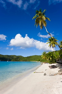 Cinnamon Bay beach and palms, St. John, U.S. Virgin Islands, Caribbeanの写真素材 [FYI03779691]