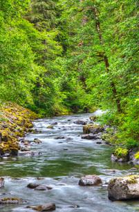 Sol Doc River, Olympic National Park, Washington'の写真素材 [FYI03779960]