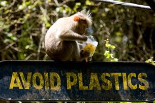 Signboard, Thekkady, Keralaの写真素材 [FYI03780040]
