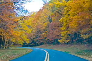 Road leading through trees with colourful foliage in the Indian summer, Blue Ridge Mountain Parkway,の写真素材 [FYI03780400]