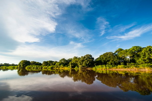 Trees reflecting in the water in a river in the Pantanal, Brazilの写真素材 [FYI03780774]