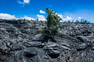 Volcanic lava stream in the Hawaii Volcanoes National Park, Big Island, Hawaiiの写真素材 [FYI03780977]
