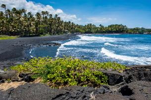 Punaluu Black Sand Beach on Big Island, Hawaiiの写真素材 [FYI03780992]