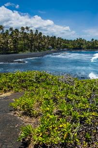Punaluu Black Sand Beach on Big Island, Hawaiiの写真素材 [FYI03780997]