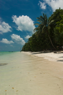 Silver sand beach with turquoise sea, Havelock Island, Andaman Islandsn Oceanの写真素材 [FYI03781179]