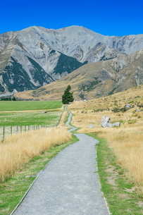Footpath leading to Craigieburn Forest Park from Castle Hill, Canterbury, South Island, New Zealandの写真素材 [FYI03781207]