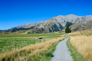Footpath leading to Craigieburn Forest Park from Castle Hill, Canterbury, South Island, New Zealandの写真素材 [FYI03781208]
