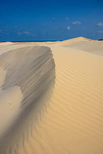 Sand dunes on the south coast of the island of Socotra, UNESCO World Heritatge Site, Yemen, Middle Eの写真素材 [FYI03781309]