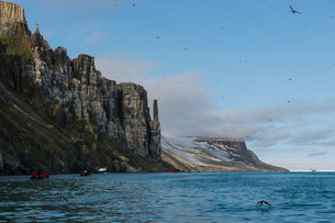 Tourist in zodiacs looking at cliffs of Alkerfjellet with thousands of kittywakes, Svalbard, Arcticの写真素材 [FYI03781675]