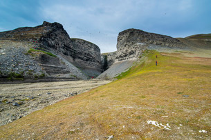 Black-legged Kittiwakes (Rissa tridactyla) flying and nesting on the cliffs at Diskobukta, Edgeoya Iの写真素材 [FYI03781700]