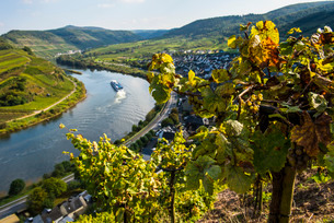 Cruise ship at the Moselle River bend at Bremm seen through the vineyards, Moselle Valley, Rhinelandの写真素材 [FYI03781793]