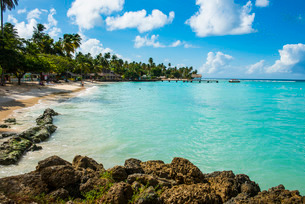 Sandy beach and palm trees of Pigeon Point, Tobago, Trinidad and Tobago, Caribbeanの写真素材 [FYI03781826]