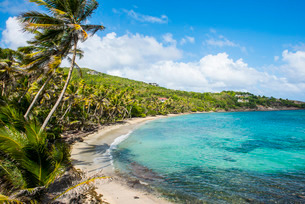 Sandy beach on Industry Bay, Bequia, The Grenadines, St. Vincent and the Grenadines, Windward Islandの写真素材 [FYI03781871]