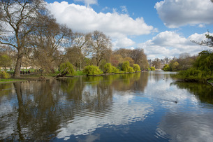 St. James's Park, Whitehall, Westminsterの写真素材 [FYI03782783]