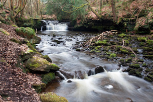 Waterfall on Harden Beck in Goitstock Wood, Cullingworth, Yorkshireの写真素材 [FYI03782877]