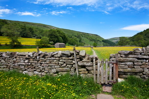 Dry stone wall and gate in meadow at Muker, Swaledale, Yorkshire Dales, Yorkshireの写真素材 [FYI03782886]