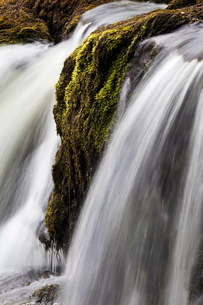 Moss and water at Redmire Force near Swinithwaite in Wensleydale, Yorkshire Dales, Yorkshireの写真素材 [FYI03782898]
