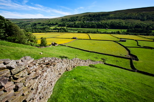 Summer meadows at Gunnerside in Swaledale, Yorkshire Dales, Yorkshireの写真素材 [FYI03782904]